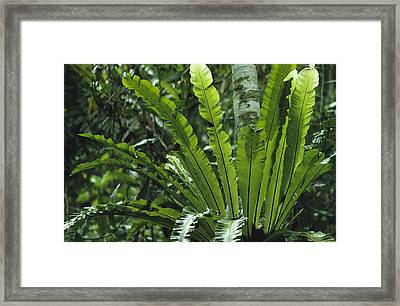Close View Of A Fern Growing On A Tree Framed Print