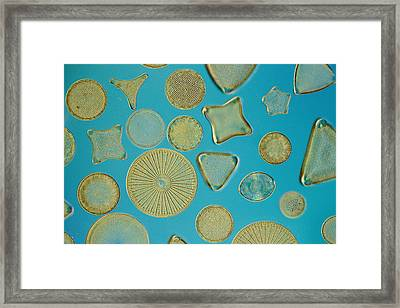 Close View Of Diatoms Framed Print