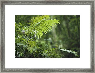 Close View Of Ferns In A Papua New Framed Print