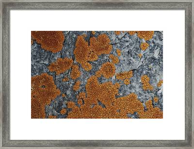 Close View Of Orange Lichen Growing Framed Print by Stephen Sharnoff