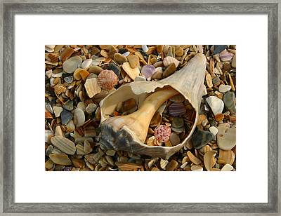 Close View Of Surf-shattered Shell Framed Print by Stephen St. John