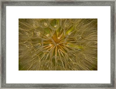 Close View Of The Seed Head Framed Print