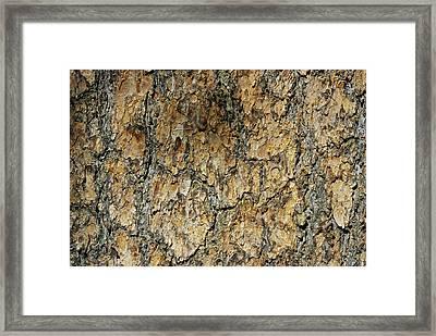 Close View Of Whitebark Pine Tree Bark Framed Print