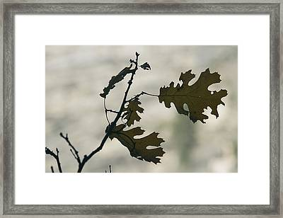 Close View Silhouette Of A California Framed Print by Marc Moritsch