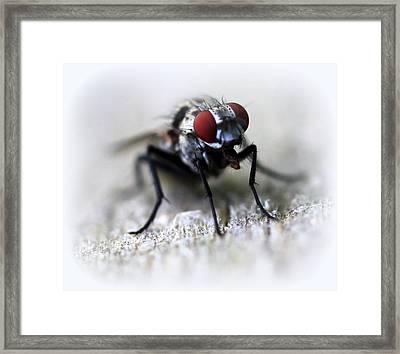 Closeup Of A Fly  Framed Print by Maureen  McDonald