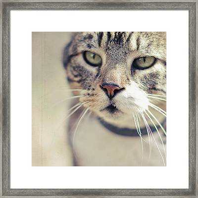 Closeup Of Face Of Tabby Cat Framed Print by Cindy Prins