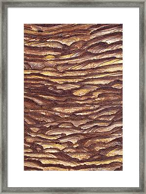 Closeup Of Sandstone Patterns, Petra, Jordan Framed Print by Fred Bruemmer