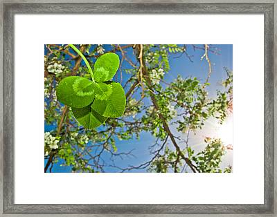 Clover And Sunflare 1 Framed Print by Amber Flowers