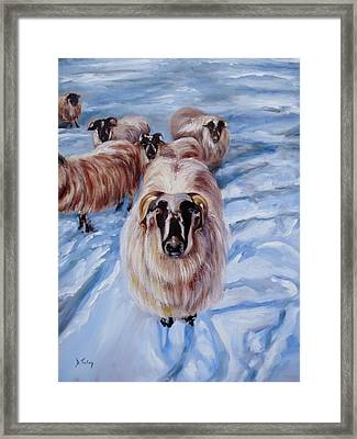 Clover At Seasons First Snowfall Framed Print by Donna Tuten