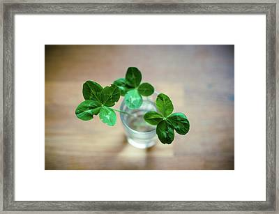 Clovers Leaves In Glass Framed Print by Øystein Tveiten