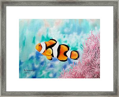 Clown Anemonefish Framed Print by Riley Geddings