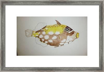 Clown Triggerfish Framed Print by Tim Forrester