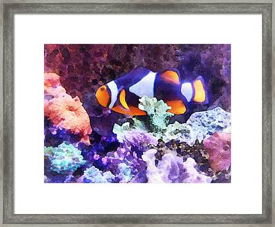 Clownfish And Coral Framed Print by Susan Savad