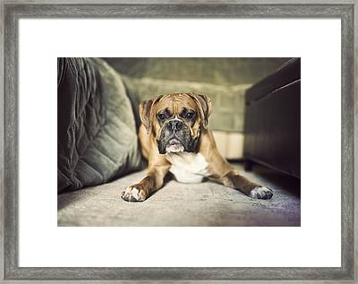 Clownin' With Clyde Framed Print by Jody Trappe Photography