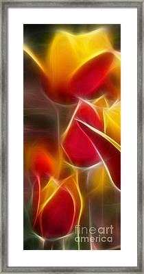 Cluisiana Tulips Triptych Panel 1 Framed Print by Peter Piatt