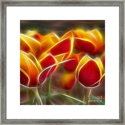 Cluisiana Tulips Triptych Panel 2 Framed Print by Peter Piatt