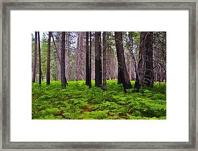 Cluster Of Ferns Framed Print by Camille Lyver