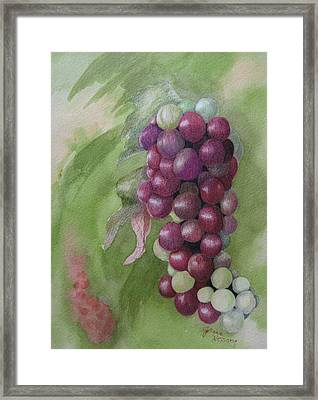 Cluster Of Grapes Framed Print by JoAnne Hessong