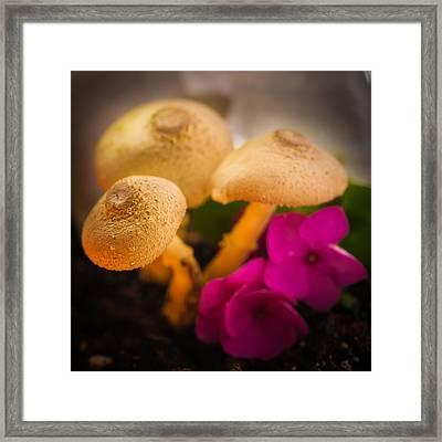 Clustered Fungi Framed Print by Gene Hilton