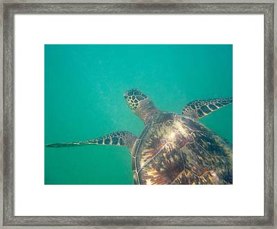 Clyde The Hawaiian Sea Turtle Framed Print by Erika Swartzkopf