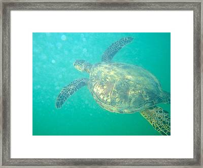 Clyde The Sea Turtle Framed Print by Erika Swartzkopf