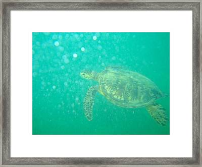 Clyde The Turtle Three Framed Print by Erika Swartzkopf
