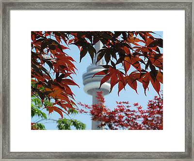 Cn Tower With Japanese Maple Framed Print by Alfred Ng