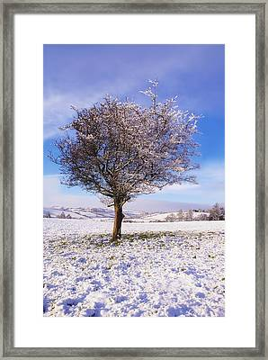 Co Antrim, Ireland Hawthorn Tree Known Framed Print by The Irish Image Collection