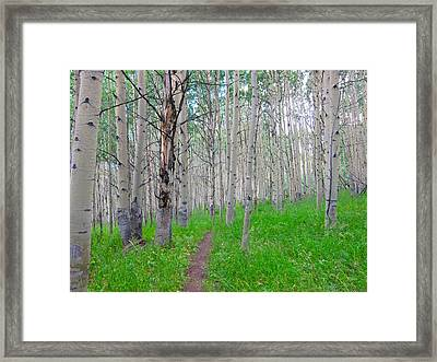 Co Aspen Mtn.bike Trail Framed Print