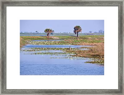 Coastal Breezes Framed Print by Jan Amiss Photography