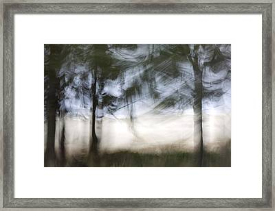 Coastal Pines Framed Print by Carol Leigh