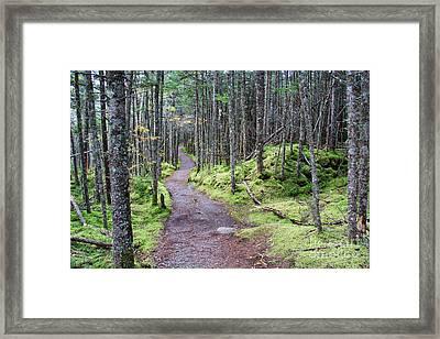 Coastal Trail At Quoddy Head State Park Framed Print by Jack Schultz