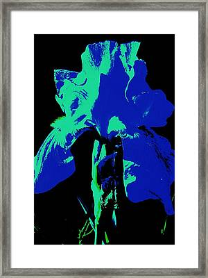 Cobalt Iris Framed Print by Todd Sherlock