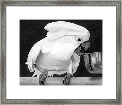 Framed Print featuring the drawing Cockatoo by Ana Tirolese