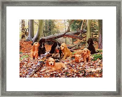 Cocker Spaniel Framed Print by Jane Burton