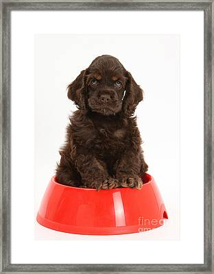 Cocker Spaniel Pup In Doggy Dish Framed Print by Mark Taylor