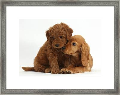 Cocker Spaniel Puppy And Goldendoodle Framed Print