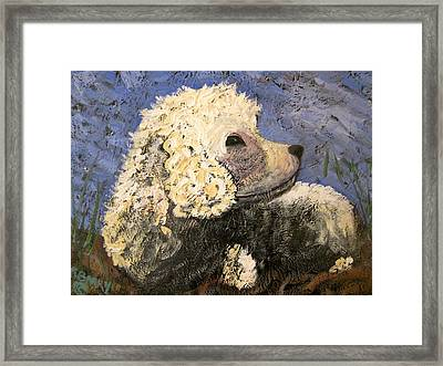 Cocker Spaniel Resting Framed Print