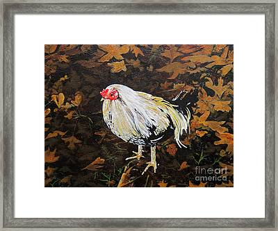 Cockerel Framed Print by Carrie Jackson