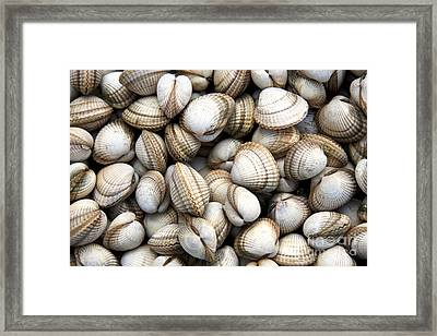Cockle Shell Background Framed Print