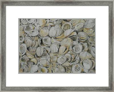 Cockle Shells Framed Print