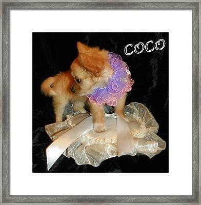 Coco I Framed Print by Sheri McLeroy