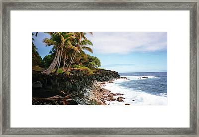 Coconut Palms Framed Print