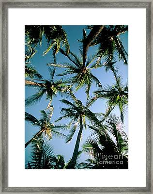 Coconut Palms Framed Print by Magrath Photography