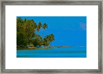 Framed Print featuring the photograph Coconuts Anyone by Eric Tressler