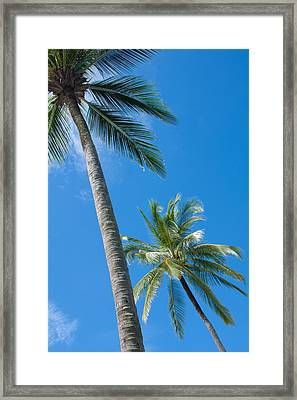 Coconuts  Framed Print by Atiketta Sangasaeng