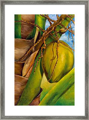 Coconuts Serie 2 Framed Print by Jose Romero