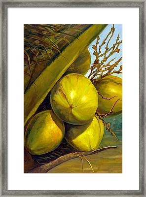 Coconuts Series One Framed Print by Jose Romero