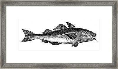 COD Framed Print by Granger