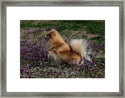 Cody Framed Print by Karen Harrison